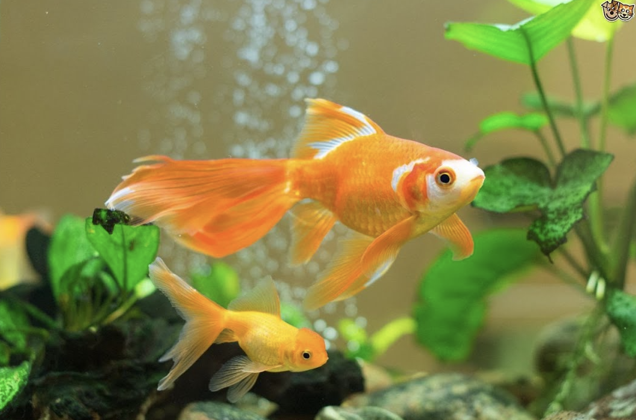 goldfishme